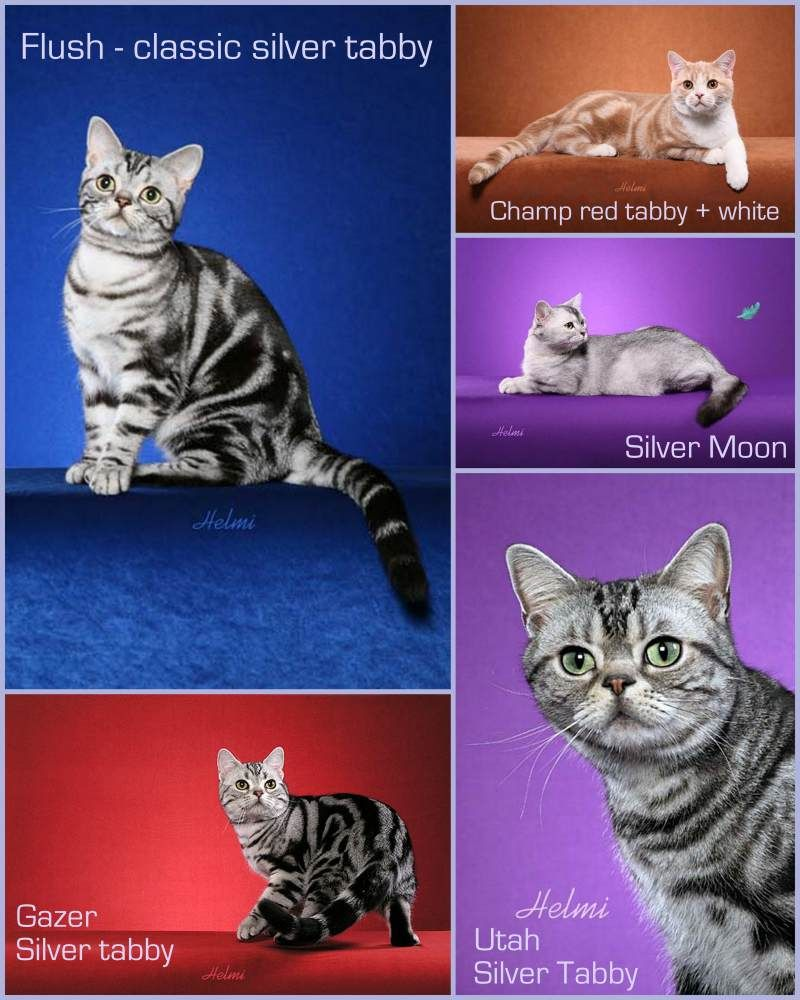 The Ultimate Cats Care Guide Cats In Care The Ultimate