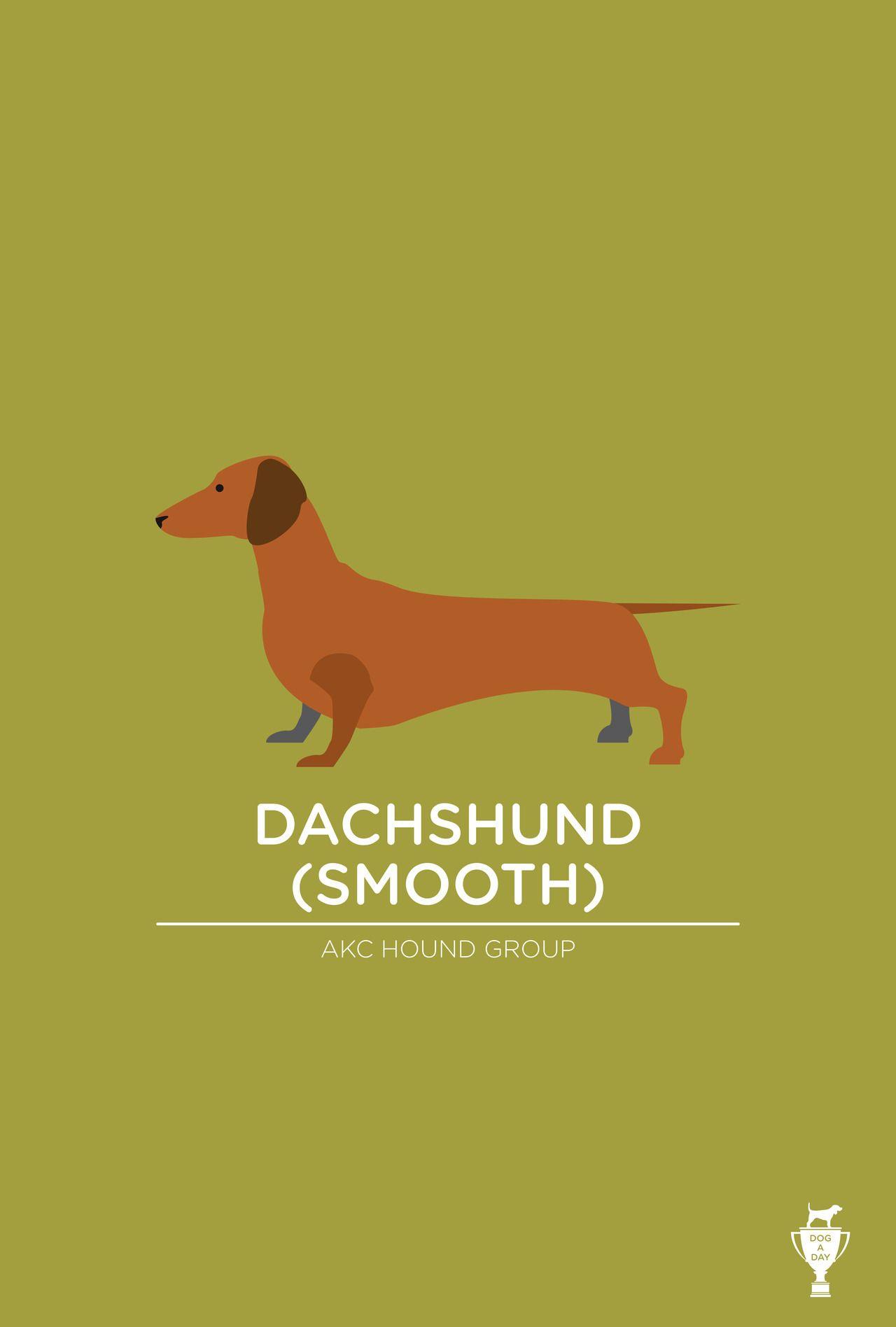 Dachshund (Smooth) Dachshund, Dachshund art, Dog art