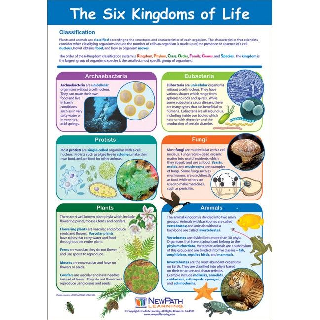 6 kingdoms of life monera is separated into archeabacteria and – Six Kingdoms Worksheet