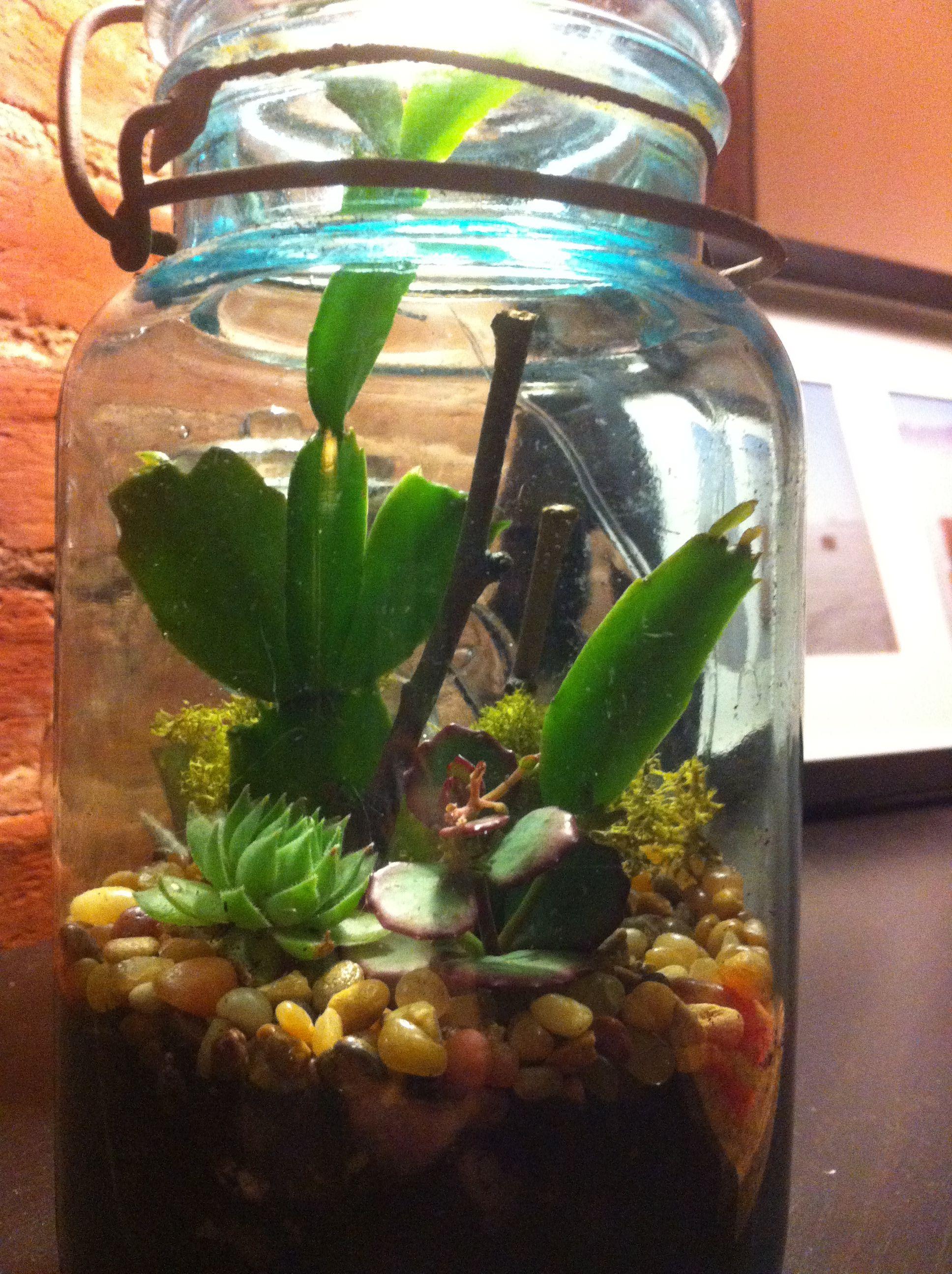 Christmas Cactus Terrarium Patio Time Cactus Terrarium Cactus