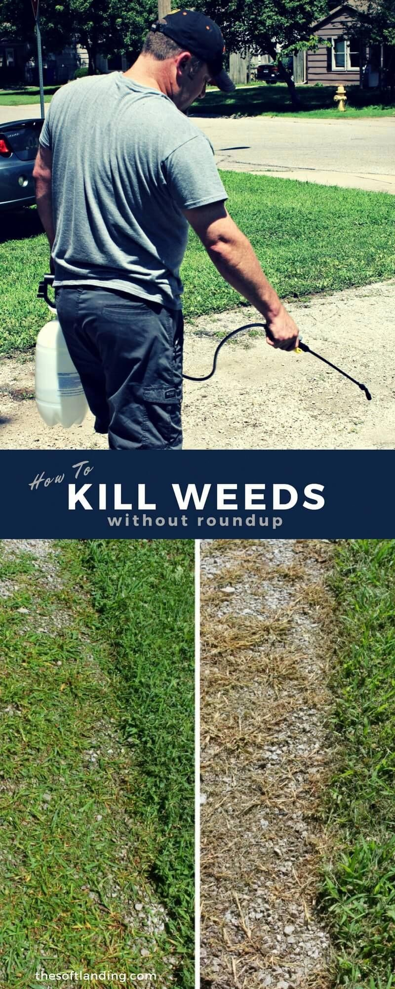 Many people grab a bottle of roundup and head out to kill weeds