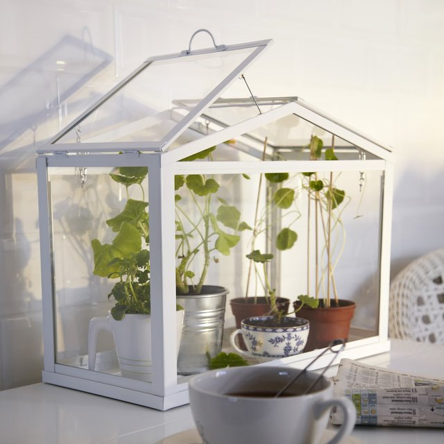 Cute indoor green house Love the little plant in the tea cup