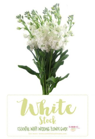Essential white wedding flower guide names types pics bouquet types of white flowers white stock click here for 20 white wedding flowers including seasons pics and pairing advice mightylinksfo