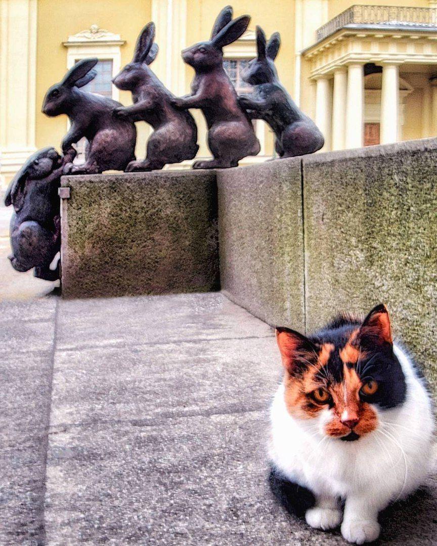 кошки санкт-петербурга картинки камин своими