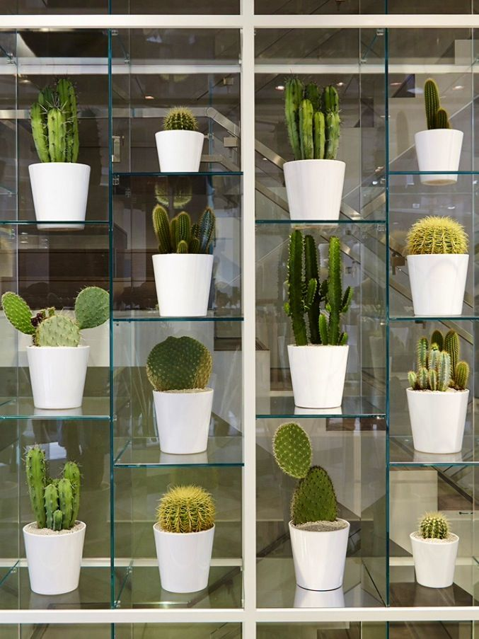 Cactus Display @Nicole Novembrino Farhi/London