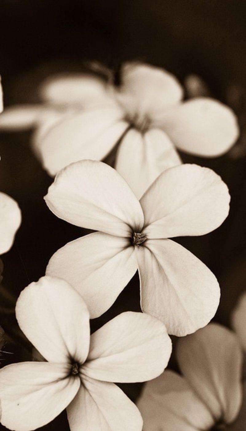 Epingle Par Ysa Rhm Sur Bloom Blanc Couleur Fleurs Fond D Ecran Telephone