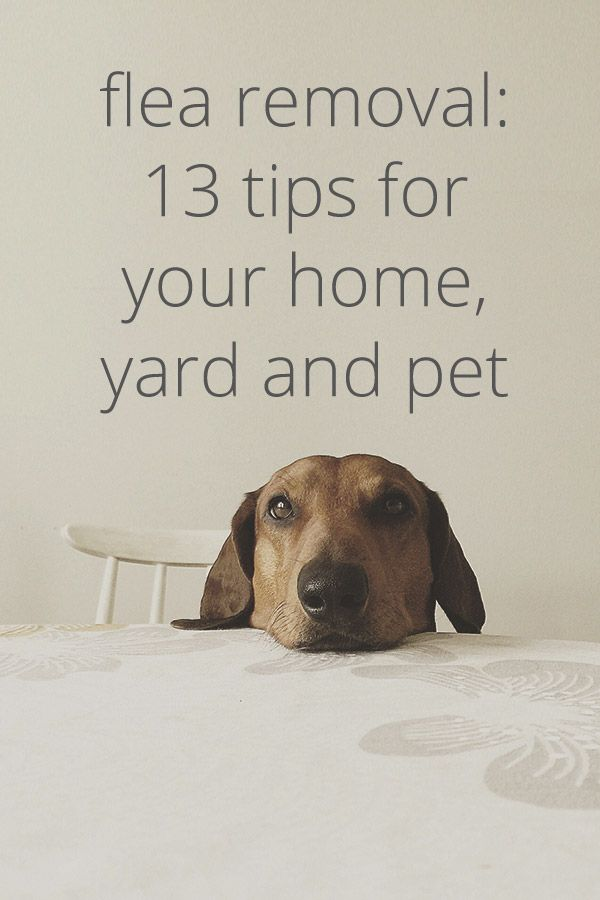 How to Get Rid of Fleas in Your House, in Your Yard, and More -   18 how to get rid of fleas in house ideas