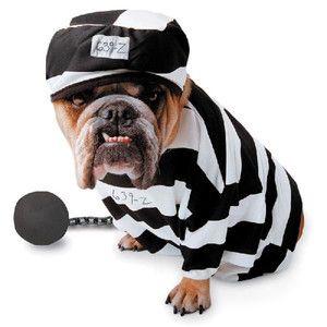 Prisoner 犬のコスチューム おもしろワンちゃん 可愛すぎる動物