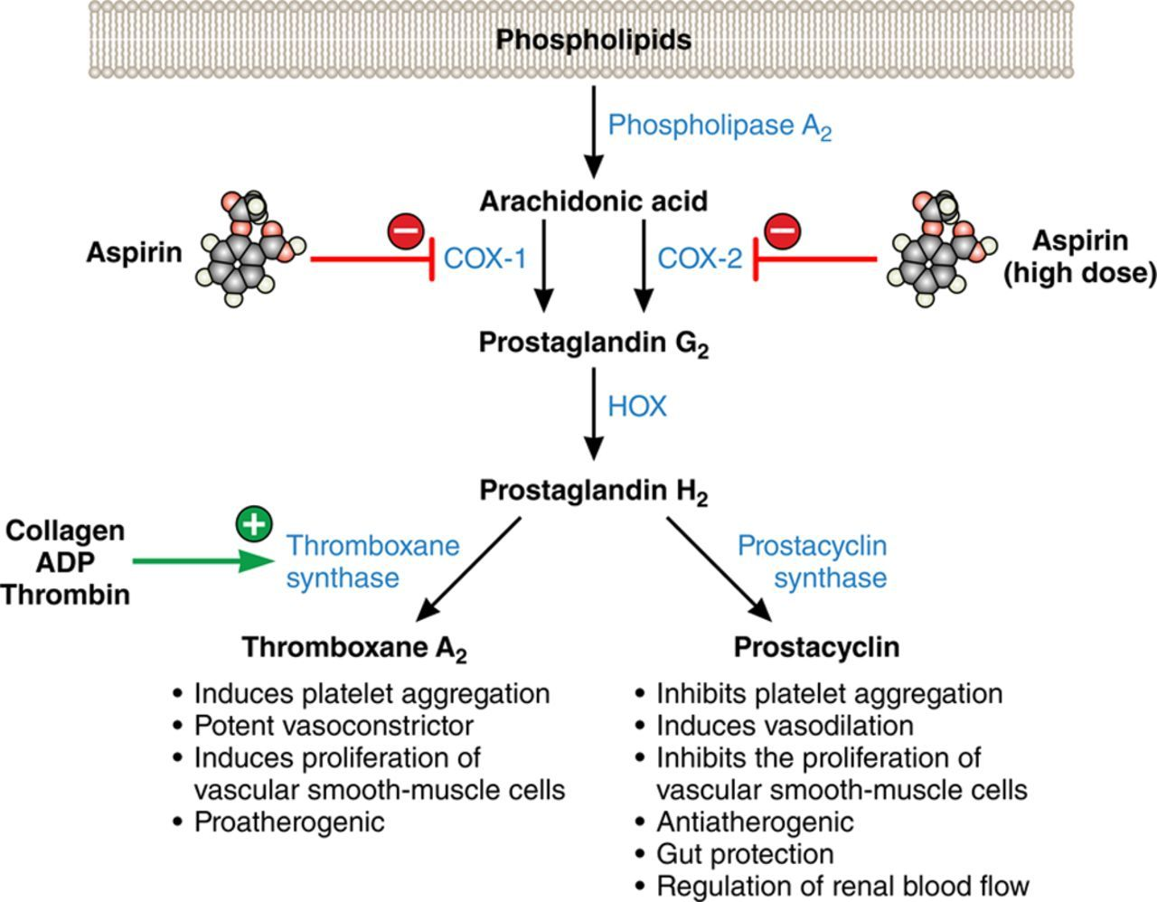 image result for aspirin mechanism of action pharmacology pharmacy line chart ms  [ 1280 x 998 Pixel ]