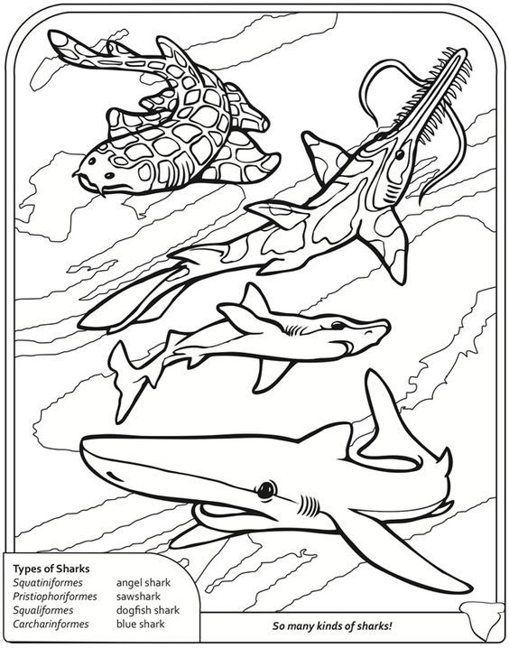 Pin de Barbara en coloring dolphin, whale, shark | Pinterest