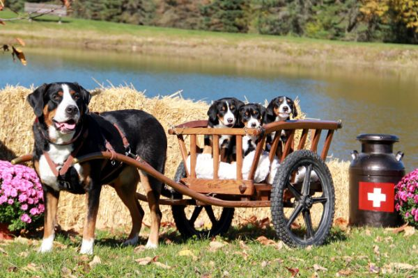 9 Questions to Ask Your Potential Breeder American
