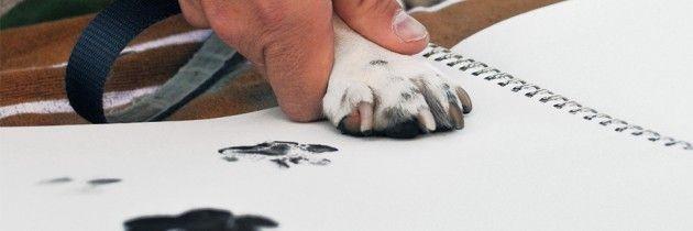 How To Get Super Glue Off Dog S Paw