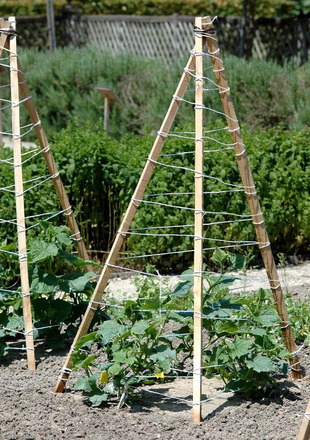 Tuteur à cornichon Aménagement jardin recup, Tuteur jardin