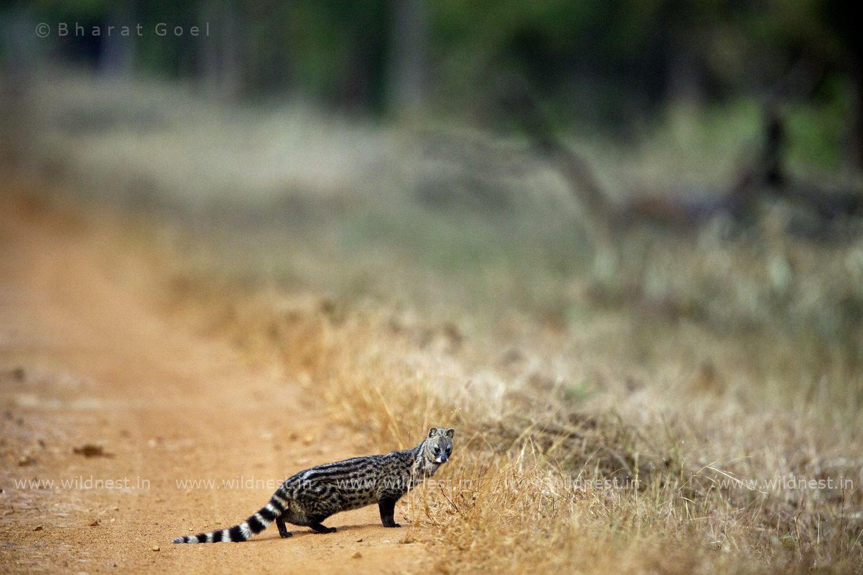 Explore Wildlife of India with Wildnest Wildlife of