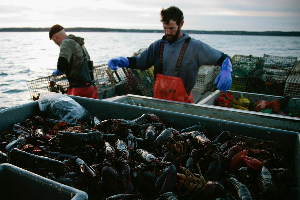 Lobster fishing in maine with their grundens on for Lobster fishing in maine
