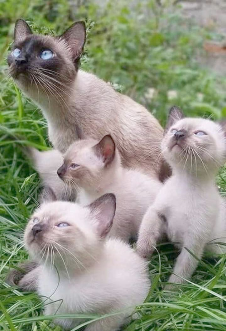 Cute Cats And Kittens Hd Wallpaper Cute Kittens In The World Funny Animals Cute Cats Cats And Kittens