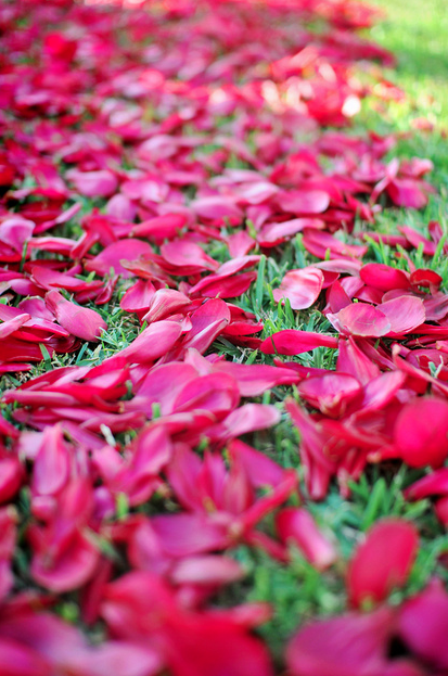 Hot pink rose petal path ceremony flowers pinterest hot pink hot pink rose petal path mightylinksfo