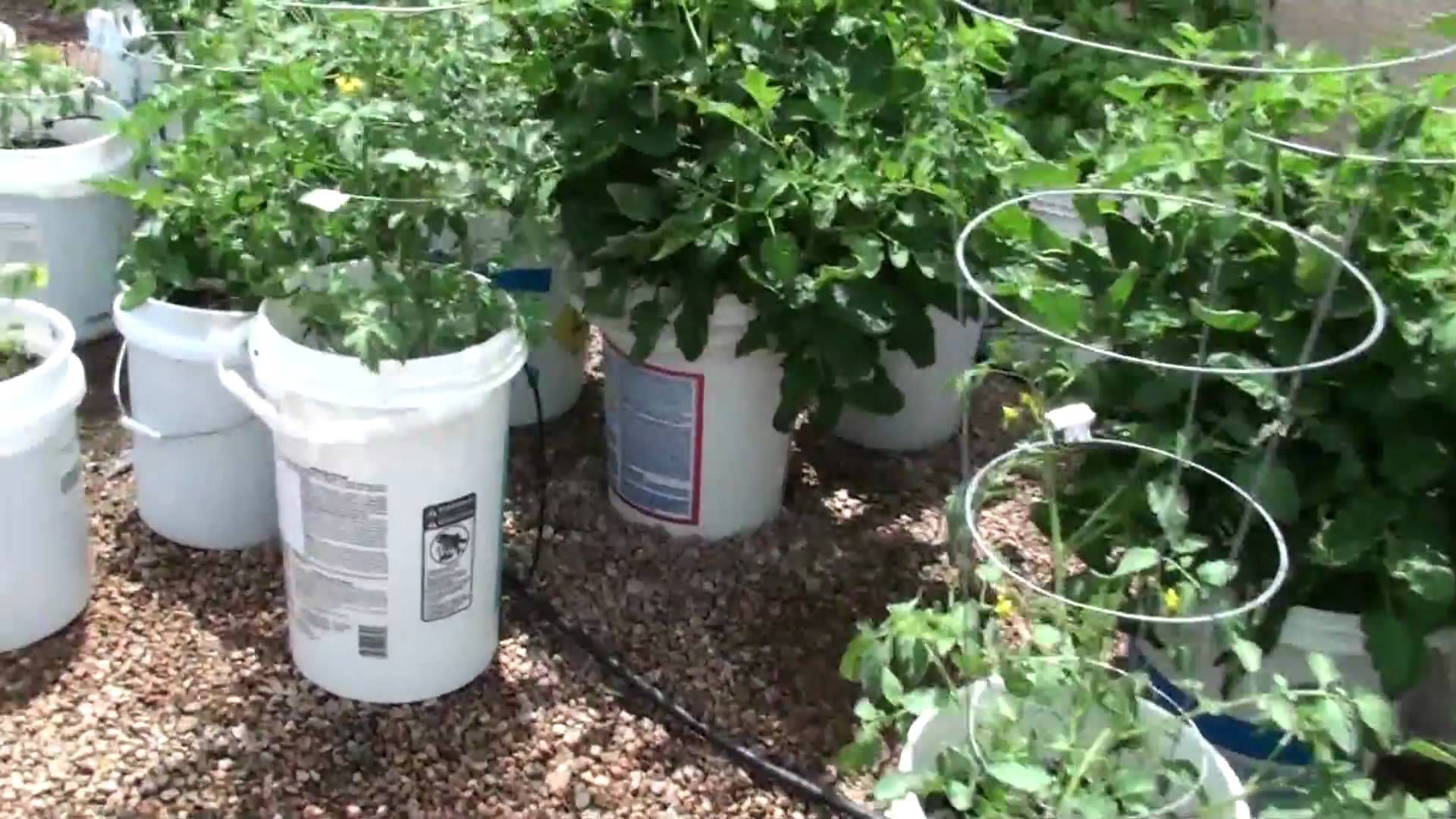 How To Make A 5 Gallon Bucket Garden 1 Holes In The Bottom 4 Above Soil Line 2 Of Gravel
