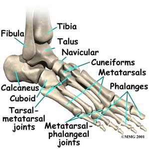Pin On Trauma Registrar Anatomy Pics