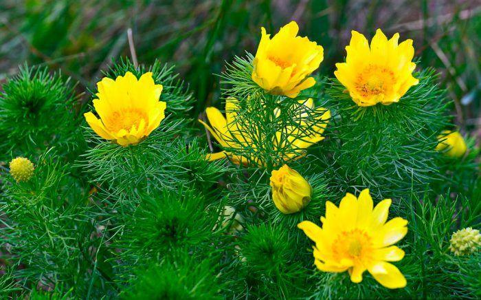 Многолетние цветы для дачи фото с названиями   Цветы ...
