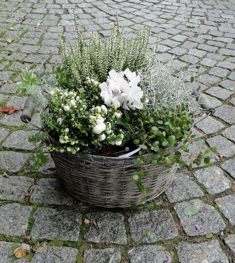 Plantering I Gammal Zinkhink Sok Pa Google Bepflanzung Gartenprodukte Gartendekoration