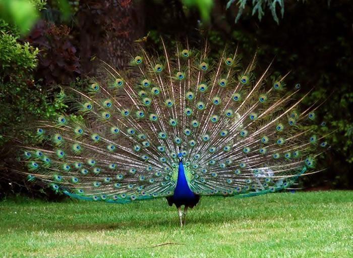 Aves de colores * \