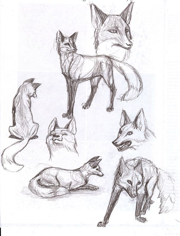 Fox Animal Study Fox In 2019 Pinterest Drawings Animal