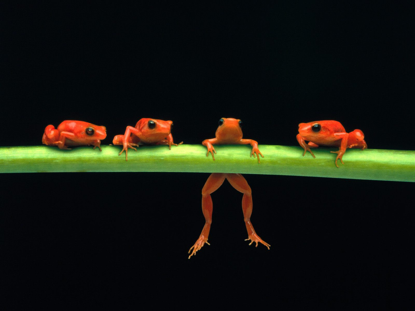 hd frog cartoon wallpaper | Colorful Frogs HQ 1600 X 1200 - Photo 6 ...