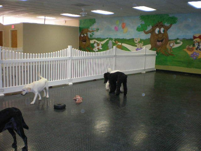 Barkingham Palace Doggie Day Care Professional