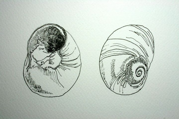 Pencil drawing of seashells поиск в google