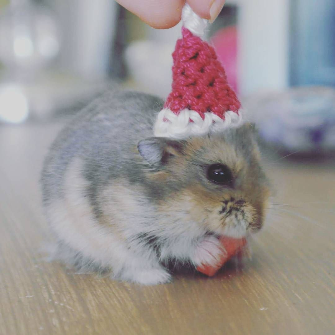 hamster wishing you all a merry Christmas and a happy new