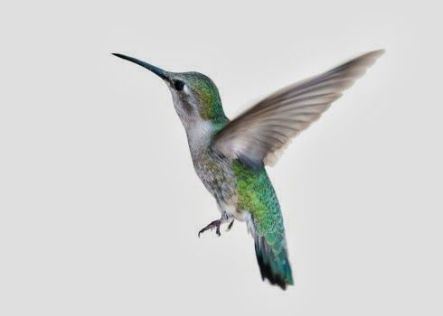 [Blog Post] Google's New Hummingbird algorithm & what #SmallBusiness Needs to Know! Read here: http://graphicd-signs.blogspot.com/2013/10/googles-new-hummingbird-algorithm-what.html
