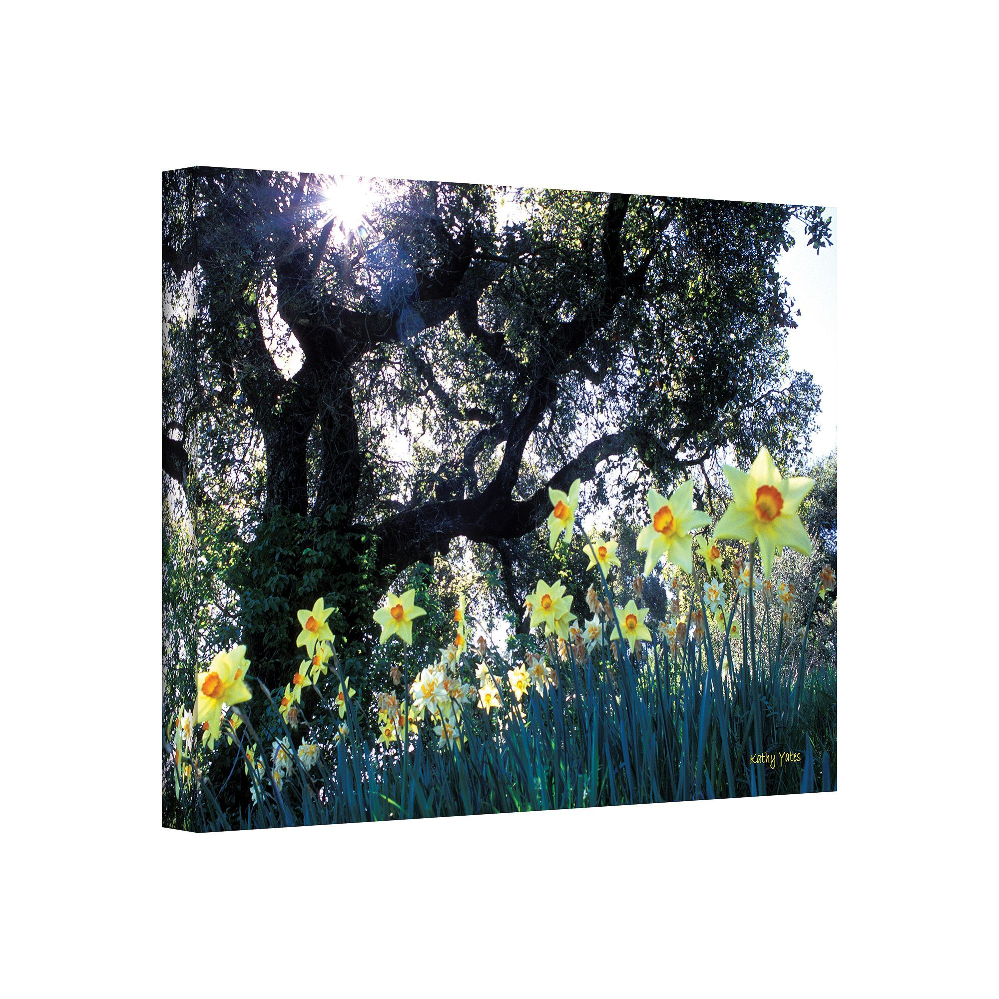 Art Wall 32 X 48 Daffodils And The Oak Canvas