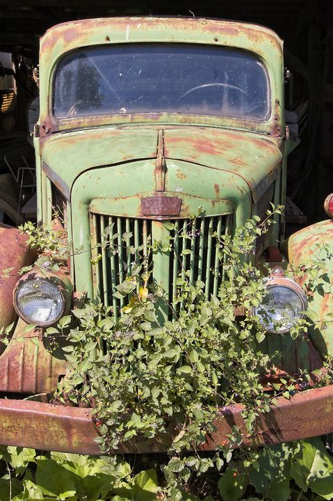 Rustic picture of a weathered green pickup truck overgrown with weeds, 1940's vintage.