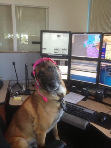 My Only Question Here Is Where Can I Find A Pink Headset I Need One Of These Work Humor Law Enforcement Life 911 Dispatcher