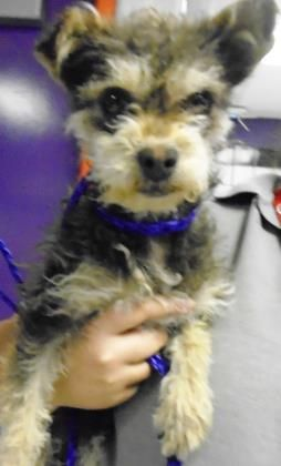 Animal Id T35137260 R Nspecies Tdog R Nbreed Tterrier Mix R