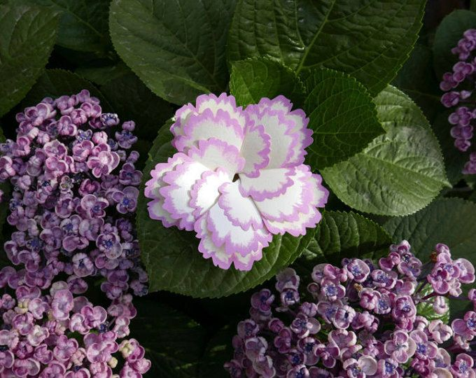 Spray Carnation Card (White-Pink)