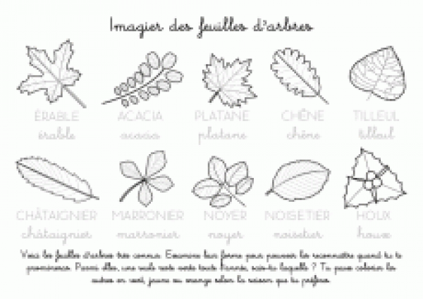 Connu Coloriage à imprimer : Imagier des feuilles d'arbres | Projets  LL47