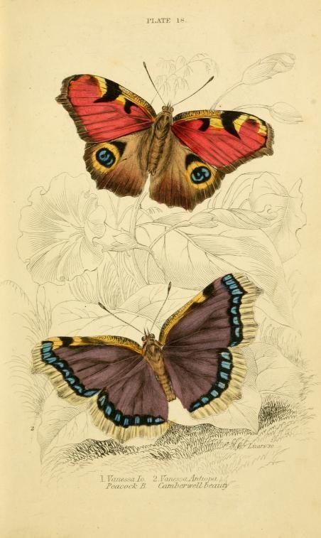 by James Duncan, Sir William Jardine (editor)