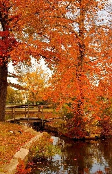 Over the bridge to Autumn Color.