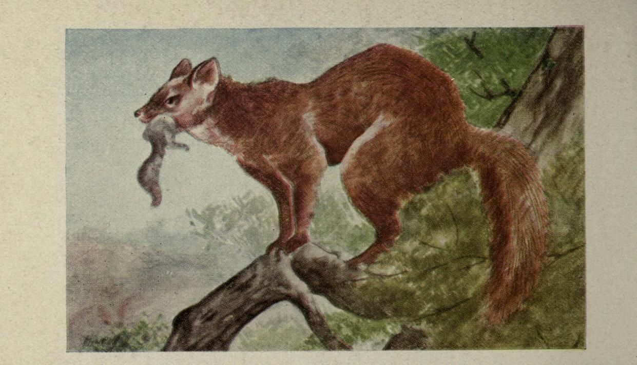 Animal guide, North American wild animals Worcester, Mass