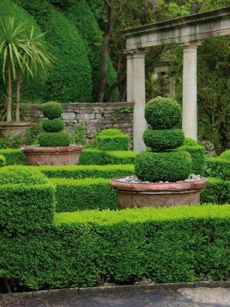 Potted Topiaries And Palm Urban Garden Garden Design Boxwood