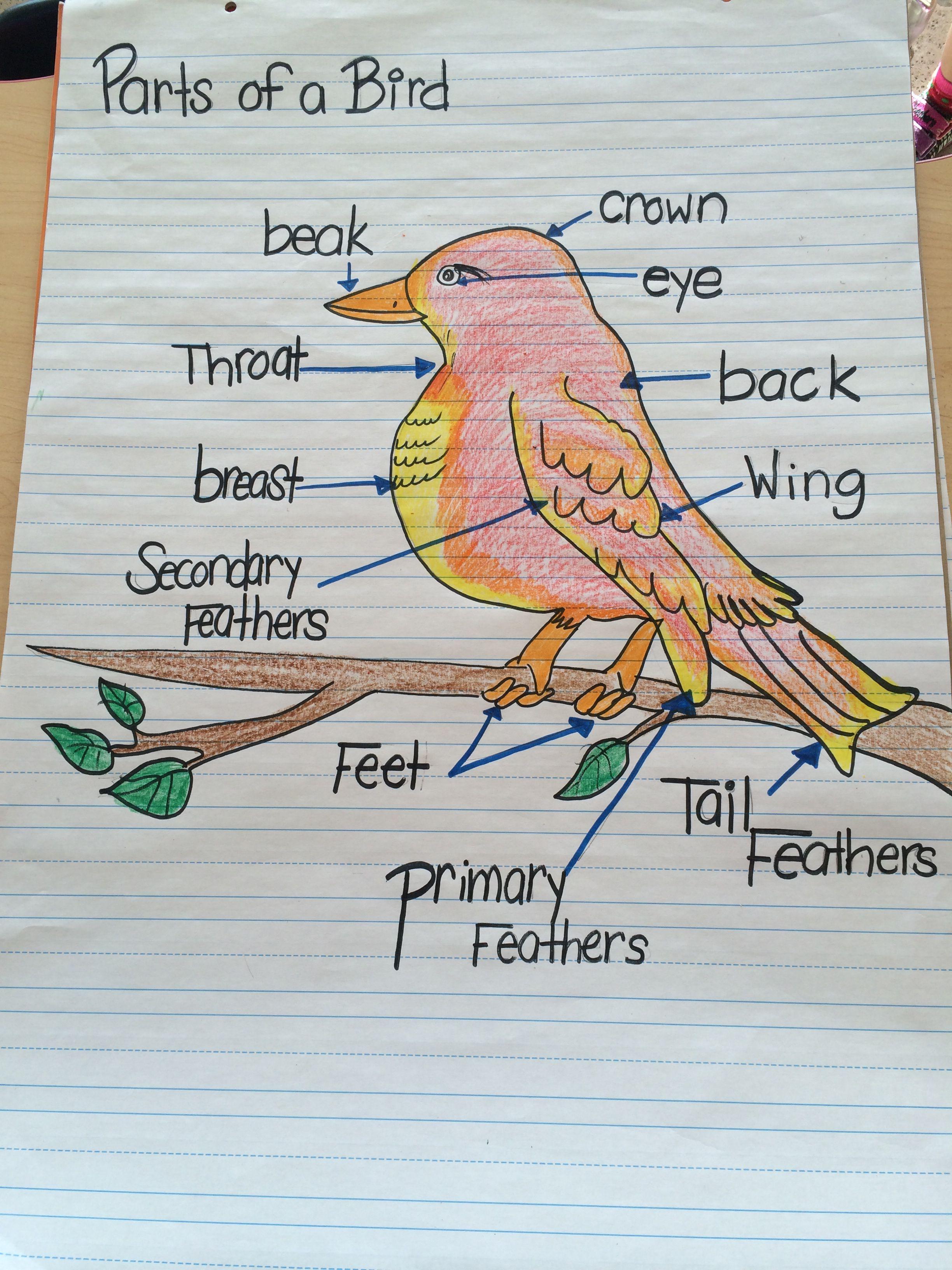 Parts of a bird chart | work ideas | Pinterest | Birds ...