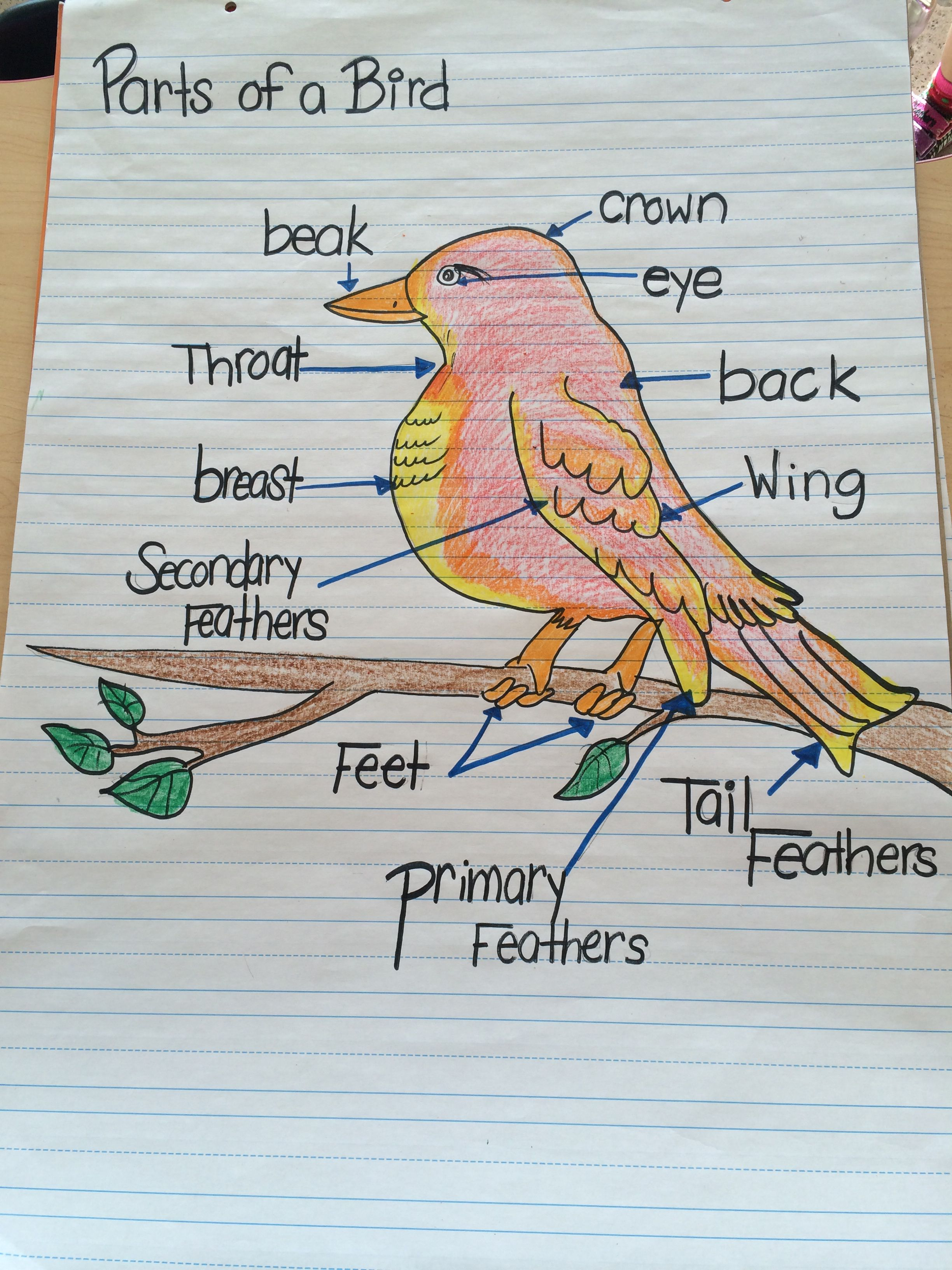 Parts Of A Bird Chart