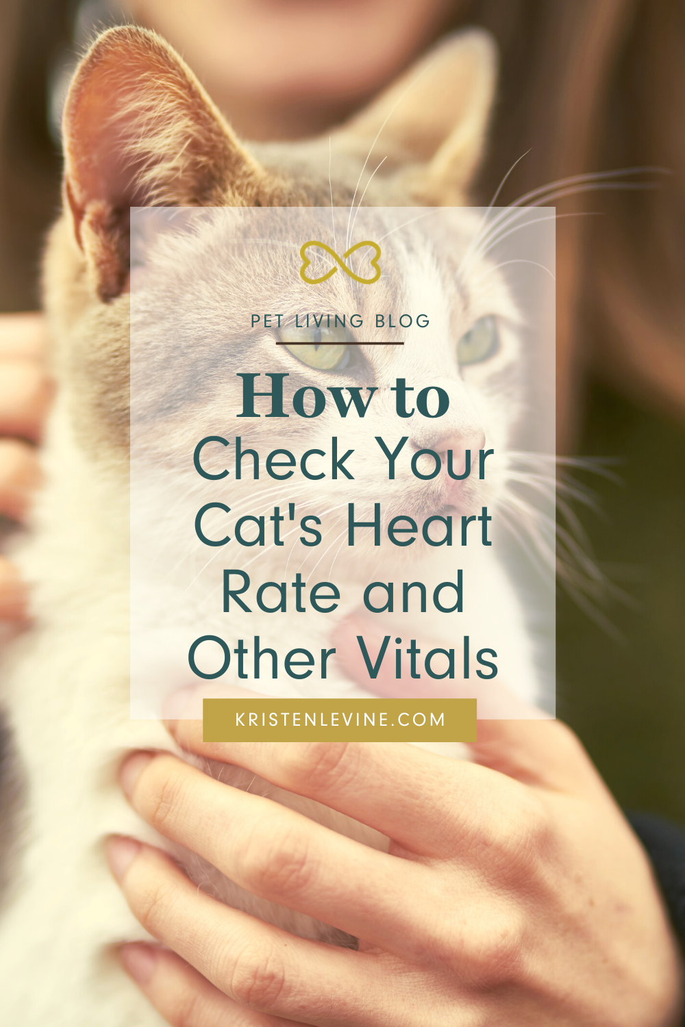 How To Check Your Cat S Vital Signs In 2020 Vital Signs Cat Vet Healthy Pets