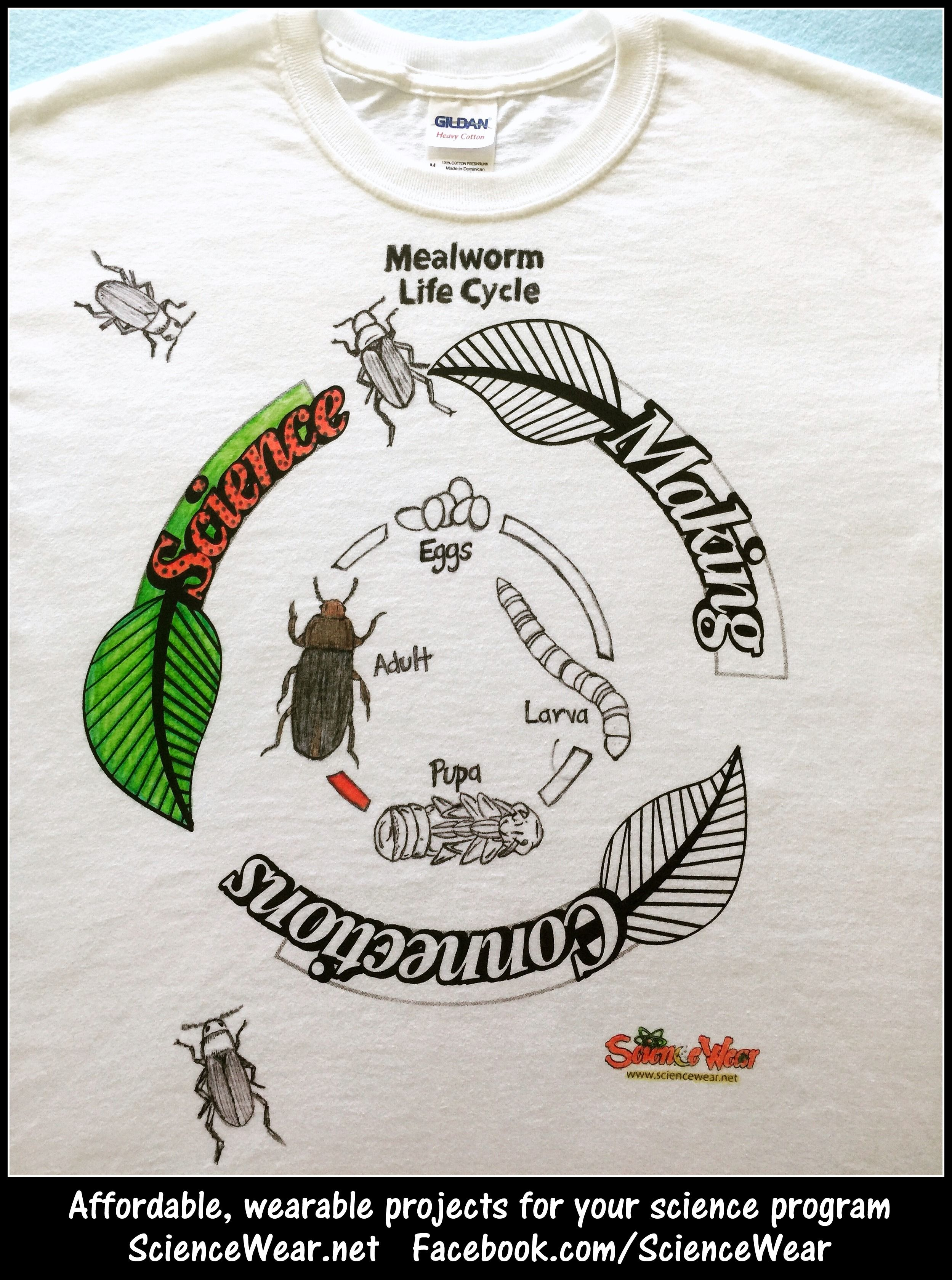 Mealworm Life Cycle Project Who Wouldnt Love Making And Wearing