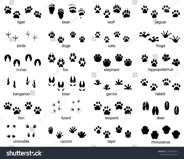 Set Of Footprints Of Wild Animals Illustration Of Black