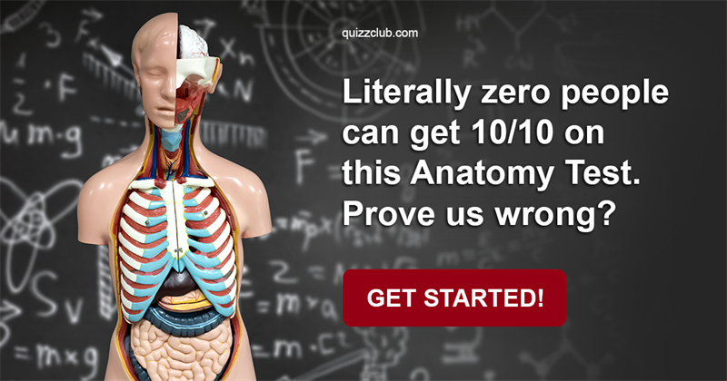 Literally Zero People Can Get 1010 On This Anatomy Test Prove Us