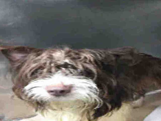 SUPER URGENT - OCEAN - A1117674 - - Brooklyn TO BE DESTROYED 07/11/17 **NEW HOPE RESCUE ONLY** - Click for info & Current Status: http://nycdogs.urgentpodr.org/ocean-a1117674/