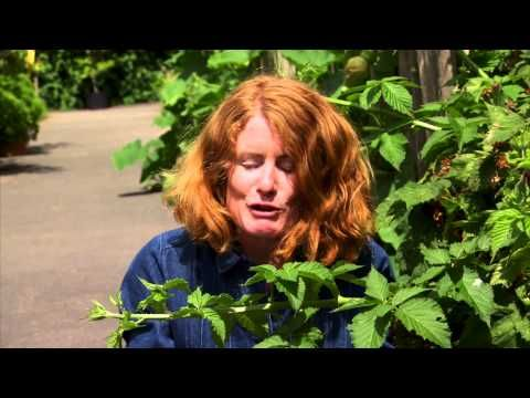 Great British Garden Revival Rhs Rosemoor Youtube British
